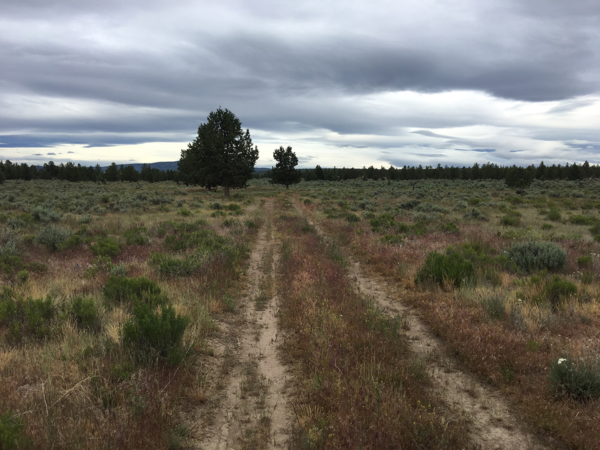 Ruts of the early pioneer road between Prineville and Lakeview.