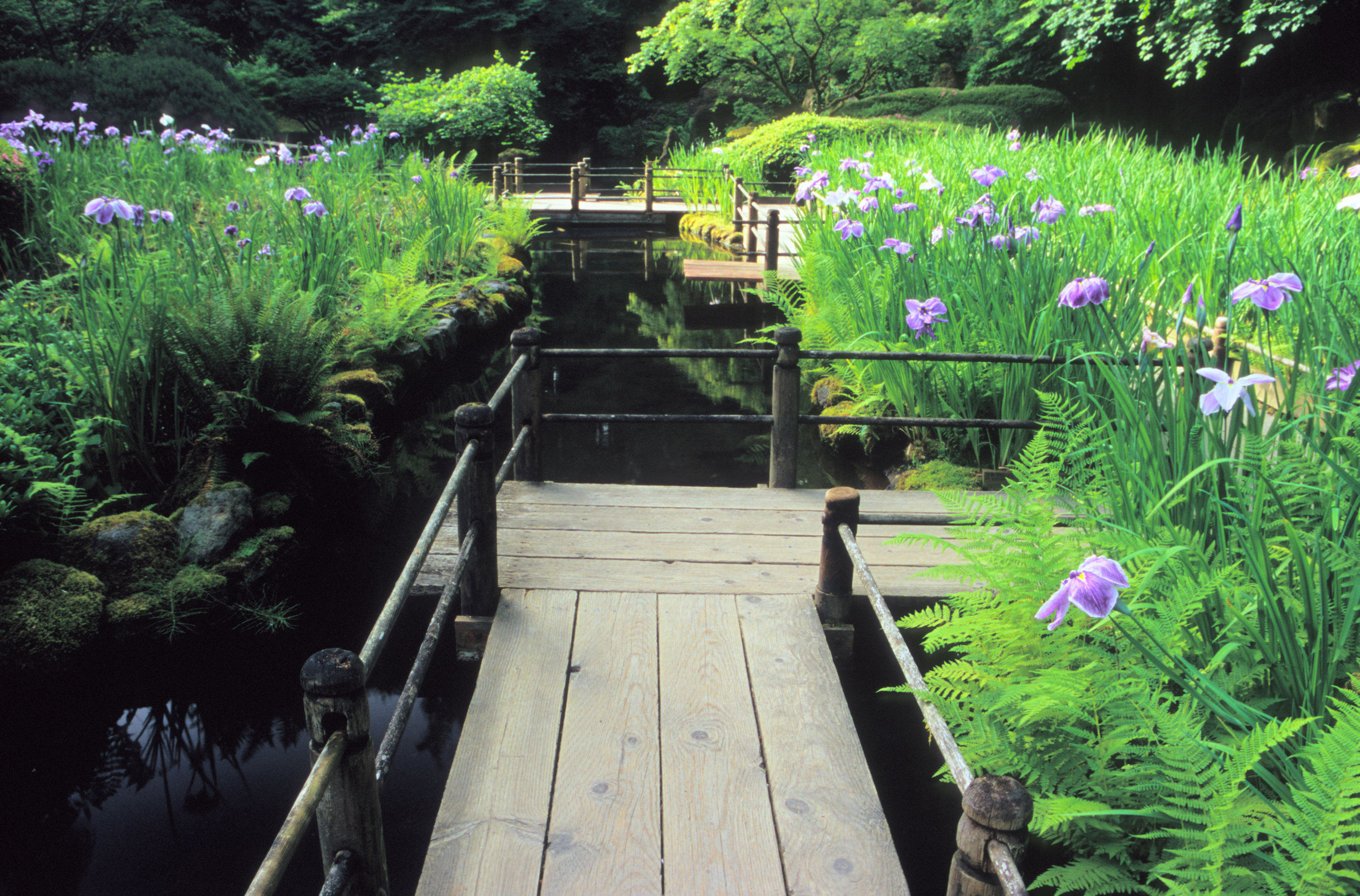 Japanese Gardens bridge II