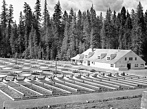 Marion Forks Fish Hatchery, ba020315
