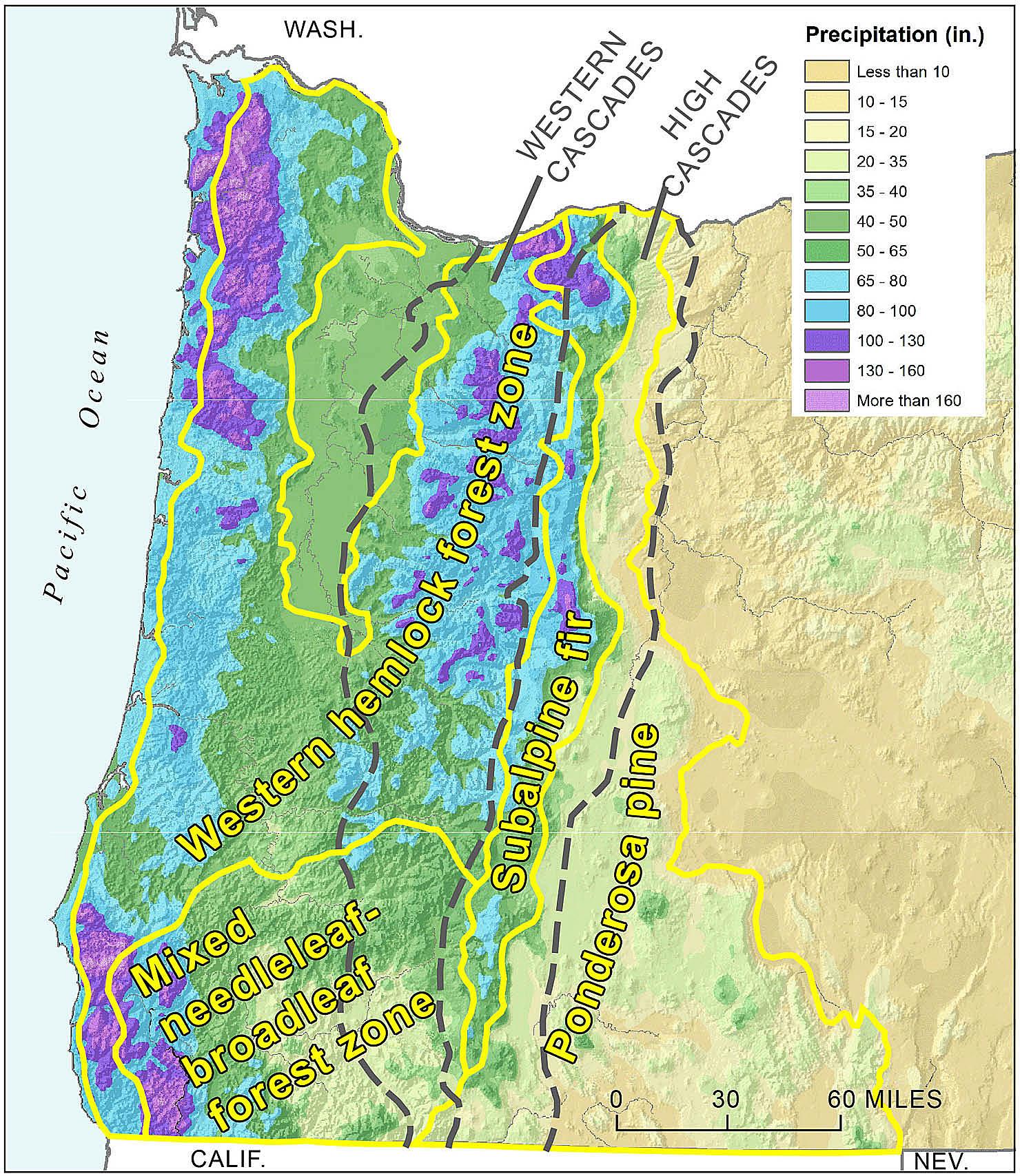 Picture of: Cascade Mountain Range In Oregon Essay