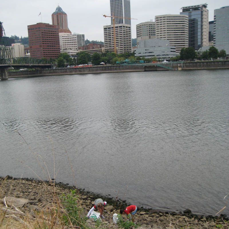 SOLV, eastbank Willamette cleanup, 2008
