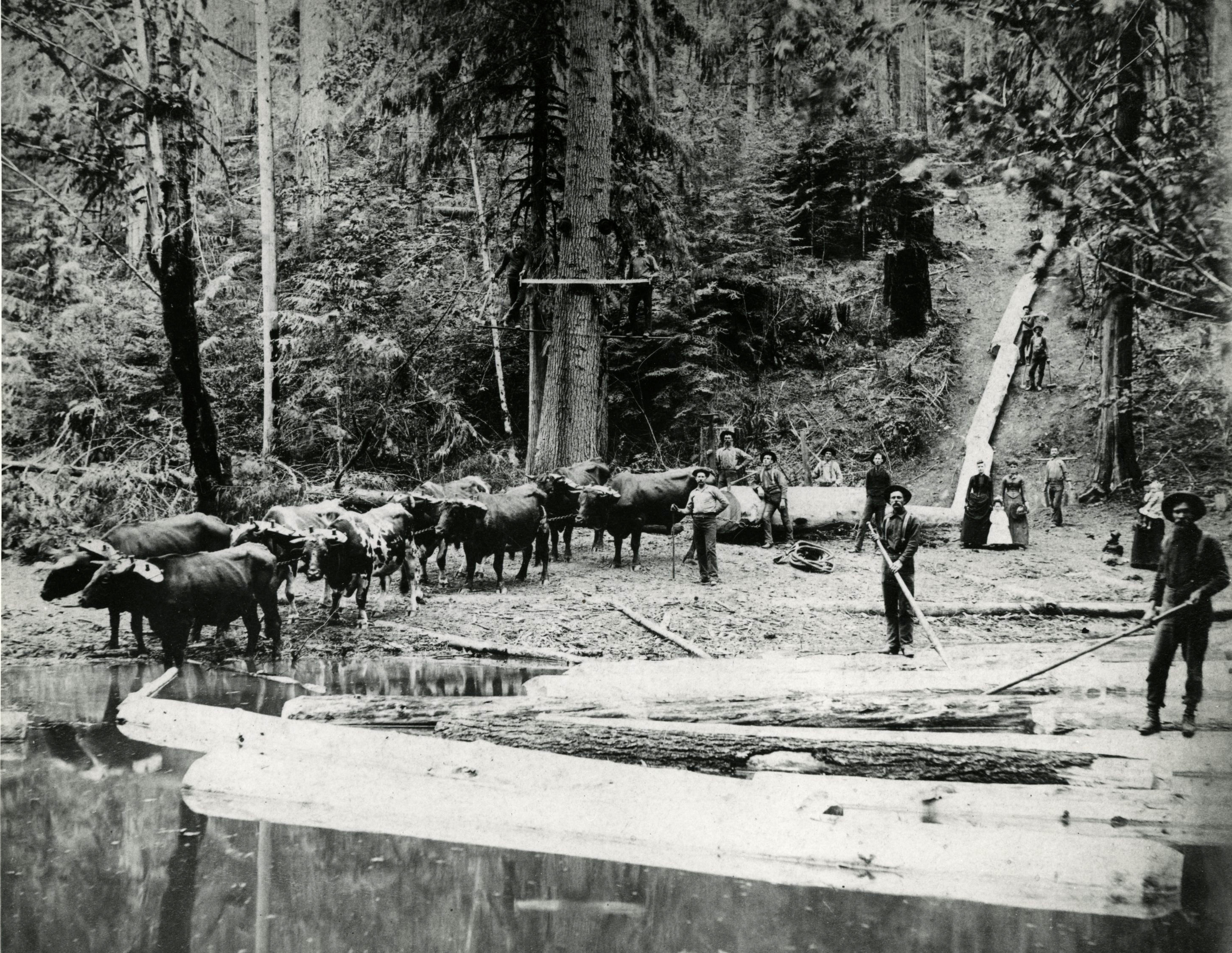 Logging on Big Sandy, Leona, Oregon, 1889