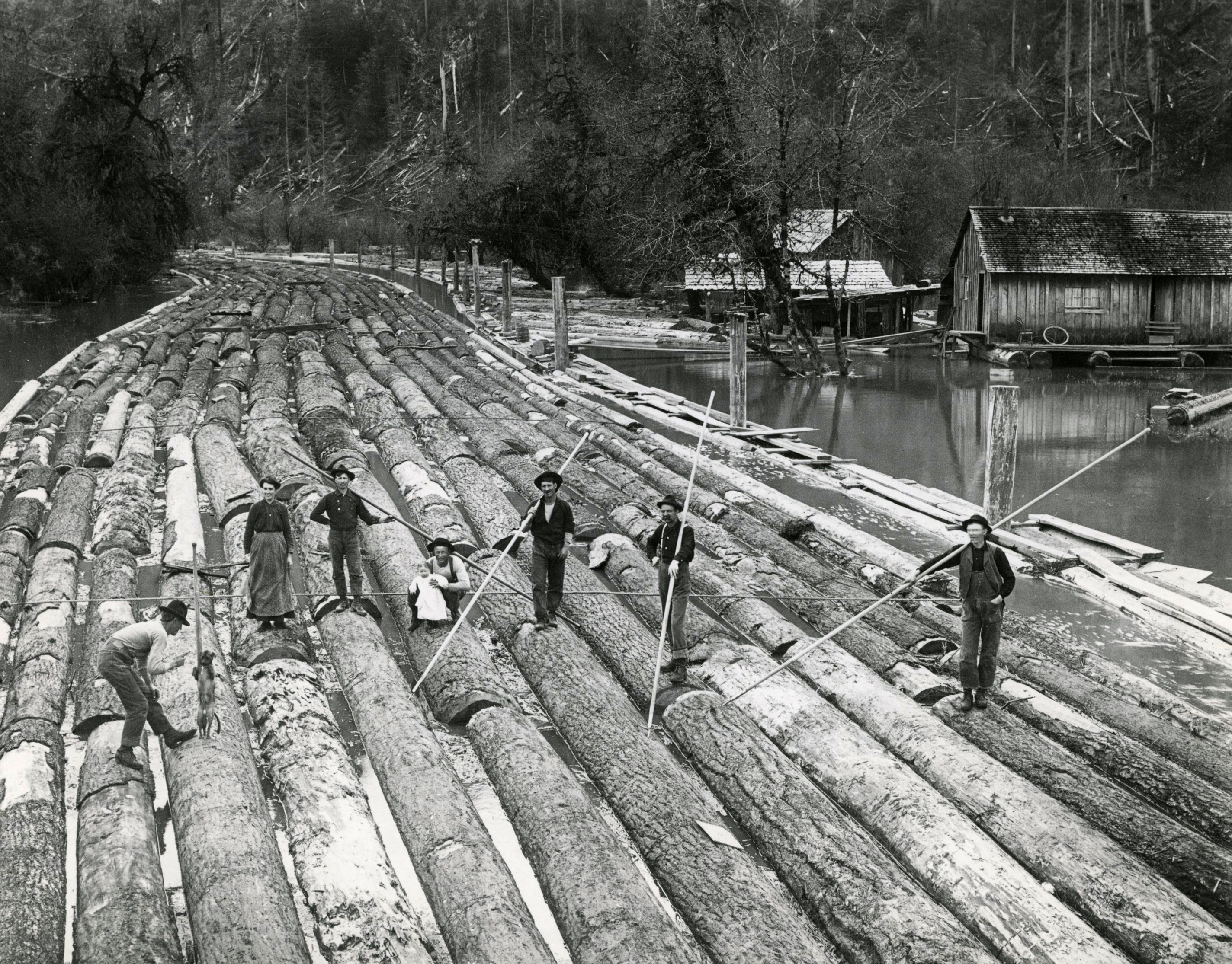 Log raft in Rinearson Slough, Columbia County