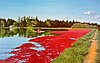 """Cranberry Harvest"" oil painting by Kent Holloway, 1999."